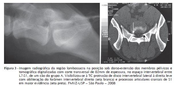 Síndrome da cauda equina no cão (estenose lombossacral) (2/2)